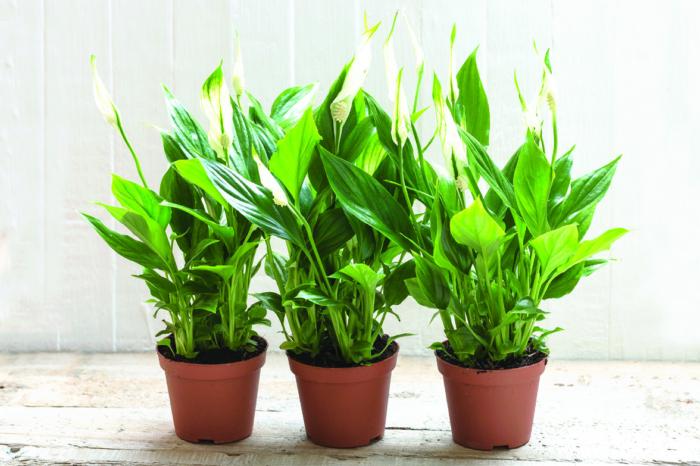 Symbolbild, 3 grüne Zimmerpflanzen