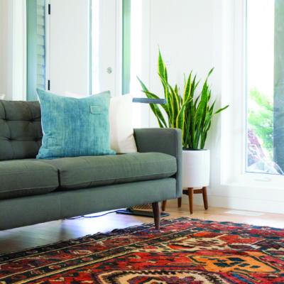 Zimmerpflanze neben grauem Wohnzimmer-Sofa