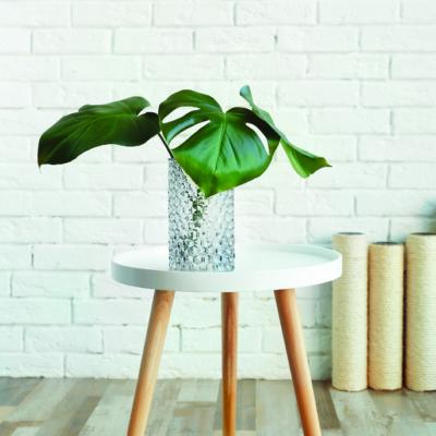 Grüne Zimmerpflanze auf Beistelltischchen